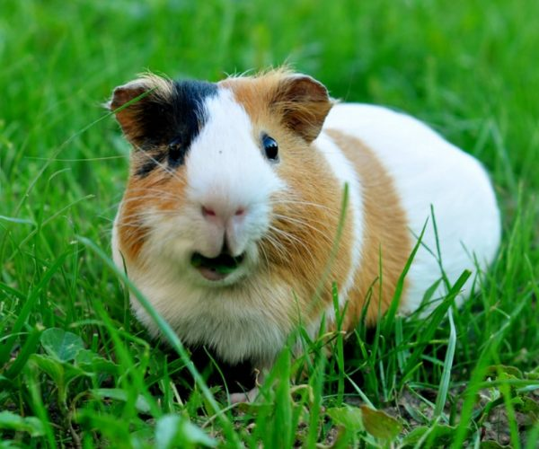 5 животных с самыми необычными названиями